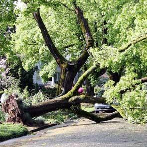 ASAP Tree & Stump