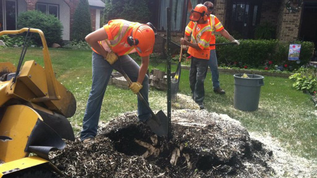 ASAP Stump Grinding and removal
