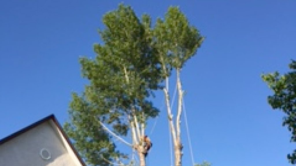 ASAP Tree & Stump Tree Service Company