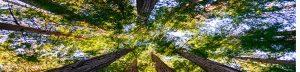 ASAP Tree & Stump Winnipeg
